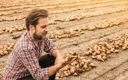 Agricoltore caucasico nel campo della cipolla di controllo della camicia di plaid Immagini Stock Libere da Diritti
