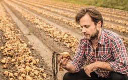 Agricoltore caucasico nel campo della cipolla di controllo della camicia di plaid Fotografia Stock Libera da Diritti