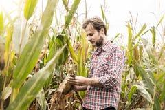 Agricoltore caucasico nel campo di grano di controllo della camicia di plaid Fotografia Stock Libera da Diritti