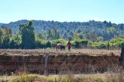 Agricoltore che ara campo con i cavalli Fotografie Stock Libere da Diritti
