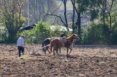 Agricoltore che ara campo con i cavalli Immagini Stock