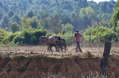 Agricoltore che ara campo con i cavalli Immagine Stock Libera da Diritti