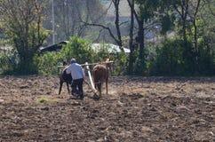 Agricoltore che ara campo con i cavalli Fotografie Stock
