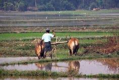 Agricoltore che ara con i buoi immagine stock libera da diritti