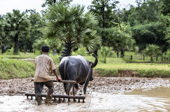 Agricoltore che ara un campo facendo uso di un bufalo Fotografie Stock Libere da Diritti