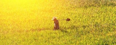 Agricoltore che cammina attraverso un giacimento di grano dorato Fotografia Stock
