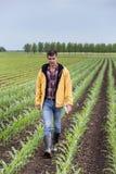 Agricoltore che cammina nel campo di grano in primavera Fotografia Stock