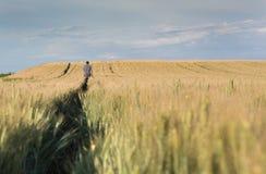 Agricoltore che cammina nel giacimento di grano Immagini Stock Libere da Diritti