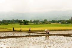 Agricoltore che cammina sul giacimento del riso Fotografie Stock Libere da Diritti