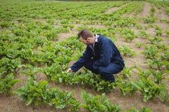 Agricoltore che controlla i suoi raccolti nel campo Immagine Stock