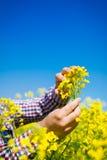Agricoltore che controlla la qualità del seme di ravizzone Immagine Stock Libera da Diritti
