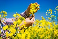 Agricoltore che controlla la qualità del seme di ravizzone Immagini Stock Libere da Diritti