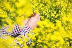 Agricoltore che controlla la qualità del seme di ravizzone Immagini Stock
