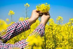 Agricoltore che controlla la qualità del seme di ravizzone Fotografia Stock Libera da Diritti