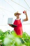Agricoltore che controlla le piante dei peperoni in serra Fotografie Stock Libere da Diritti