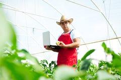 Agricoltore che controlla le piante dei peperoni in serra Fotografia Stock Libera da Diritti