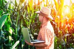 Agricoltore che controlla le piante di cereale Immagini Stock Libere da Diritti