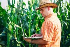 Agricoltore che controlla le piante di cereale Immagini Stock