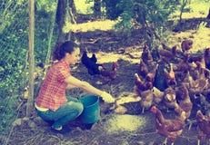 Agricoltore che dà i polli d'alimentazione sull'azienda avicola Fotografia Stock