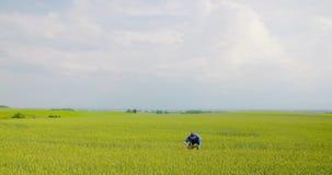 agricoltore che esamina il settore agricolo stock footage