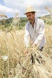 Agricoltore che fa il raccolto tradizionale del grano in Grecia Fotografia Stock