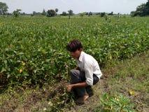 Agricoltore che fa lavoro immagine stock