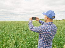Agricoltore che fotografa la pianta del grano nel campo facendo uso del telefono cellulare Fotografia Stock Libera da Diritti