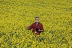 Agricoltore che gesturing nel giacimento sbocciante del seme di ravizzone immagini stock