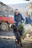 Agricoltore che gioca con il cane Immagini Stock