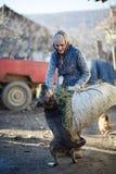 Agricoltore che gioca con il cane Immagini Stock Libere da Diritti