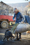 Agricoltore che gioca con il cane Fotografia Stock