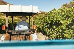 Agricoltore che guida il suo trattore nella vigna Fotografia Stock