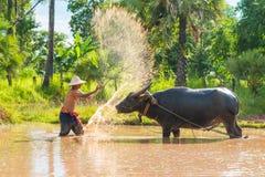 Agricoltore che immerge acqua e che getta al bufalo del bagno Fotografie Stock