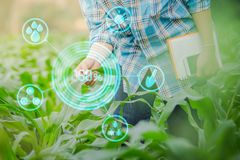 Agricoltore che ispeziona cereale nel giardino di agricoltura Fotografia Stock
