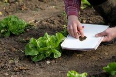 Agricoltore che ispeziona i prodotti in giardino Immagine Stock Libera da Diritti