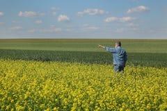 Agricoltore che ispeziona il raccolto del seme di ravizzone nel campo Fotografia Stock Libera da Diritti
