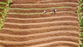 Agricoltore che lavora al giacimento a terrazze della cipolla rossa Fotografie Stock Libere da Diritti