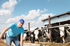 Agricoltore che lavora all'azienda agricola con le mucche da latte Fotografia Stock