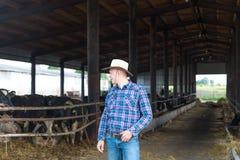 Agricoltore che lavora all'azienda agricola con le mucche da latte Fotografia Stock Libera da Diritti