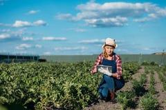 Agricoltore che lavora con la compressa digitale Immagini Stock