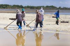 Agricoltore che lavora lo strato del sale nel campo Fotografia Stock