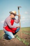 Agricoltore che lavora nel campo di grano Fotografie Stock Libere da Diritti