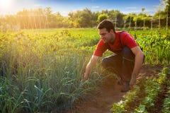 Agricoltore che lavora nel giardino Fotografie Stock