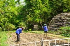 Agricoltore che lavora nel giardino Immagini Stock