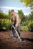 Agricoltore che lavora nel giardino per mezzo di un rastrello che livella il pl Immagine Stock Libera da Diritti