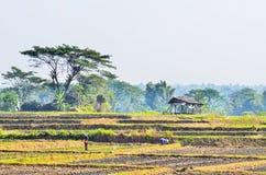 Agricoltore che lavora nell'azienda agricola Fotografia Stock Libera da Diritti