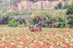 Agricoltore che lavora nell'azienda agricola di verdure Fotografie Stock