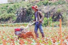 Agricoltore che lavora nell'azienda agricola di verdure Fotografie Stock Libere da Diritti