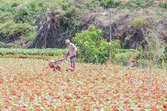 Agricoltore che lavora nell'azienda agricola di verdure Immagine Stock Libera da Diritti
