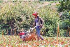 Agricoltore che lavora nell'azienda agricola di verdure Fotografia Stock